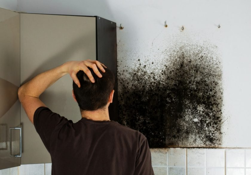 Mould Inspection | Mould Testing | Health Safety Consultants